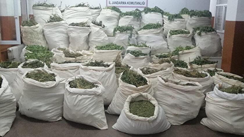 Bingöl İl Jandarma Komutanlığınca Genç ilçesi kırsalında gerçekleştirilen operasyonda, 26 ayrı noktada 6 milyon 110 bin kök kenevir bitkisinin ele geçirildi.