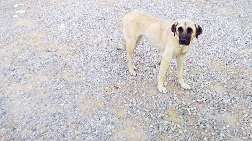 Vatandaşlar, durumu Sinop Belediyesi ve diğer yetkililere bildirdiklerini ancak kimsenin gelip köpekleri almadığını söyledi.
