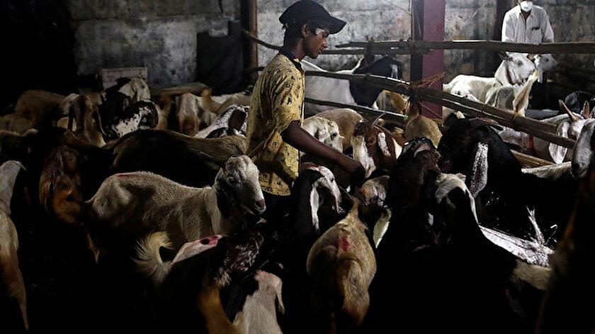 Hükümet hayvan pazarlarına izin vermezken hayvanların satılması ve satın alınması çoğu yerde yasaklanmış durumda.