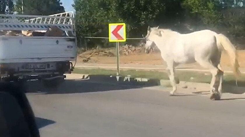 Atın içler acısı hal yoldan geçen sürücülerin tepkisine neden oldu.