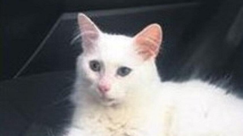 Ayasofyanın ünlü kedisi Gliye arkadaş geldi