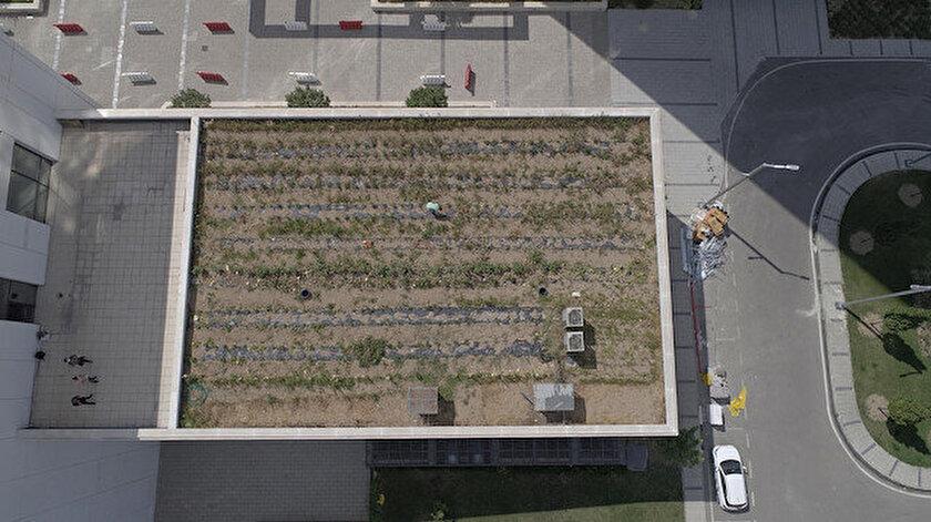 Gebzedeki Bilişim Vadisinin çatısında şaşırtan görüntü: Organik tarım yapıyor!