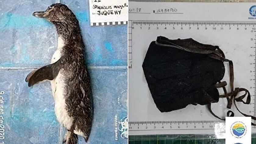 Ölmüş bir halde bulunan penguene otopsi yapıldı.