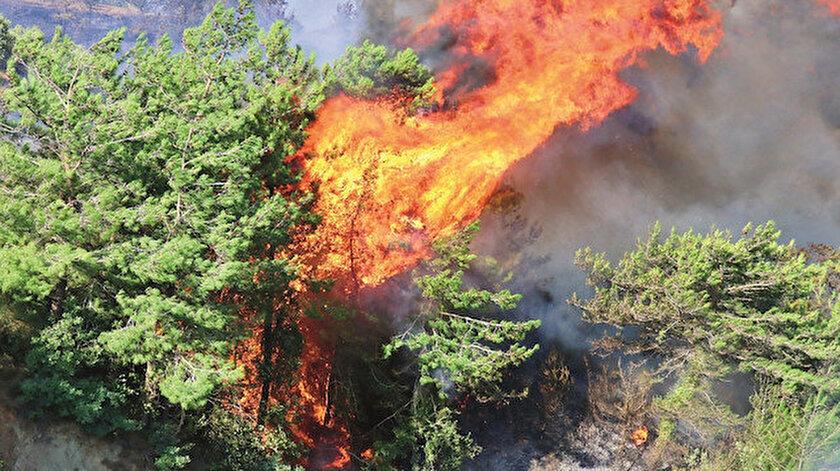 Hatayda ormanları PKK yakıyor!