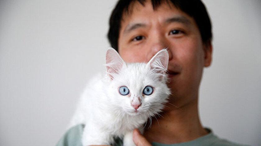 Çinli Sun Pıng, internette kedilerle alakalı araştırma yaparken tanıştığı Van kedisi için 7 bin kilometre yol geldi.