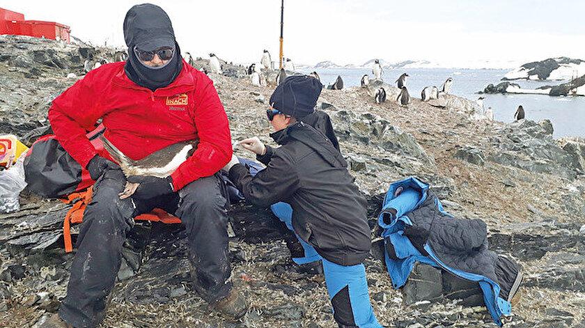 Proje kapsamında 100 penguene ait oküler yüzey örnekleri toplandı.