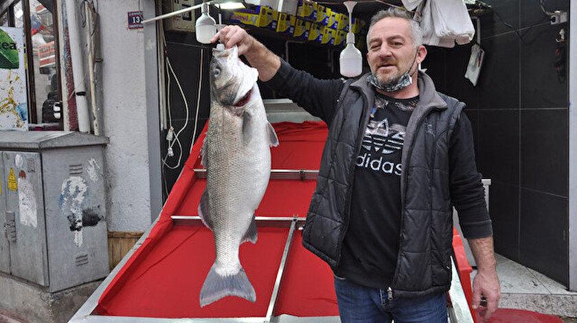 14 kilogramlık levrek, bin 600 liraya alıcısını bekliyor