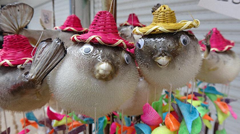 Zehirli balon balıkları süs eşyası olarak satılıyor.