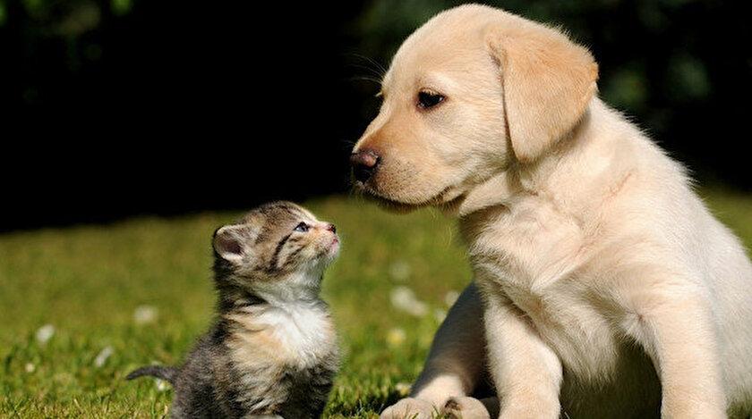 AK Parti hayvan hakları düzenlemesi için tarih verdi: Evcil hayvanların petshoplarda satılması ortadan kalkacak
