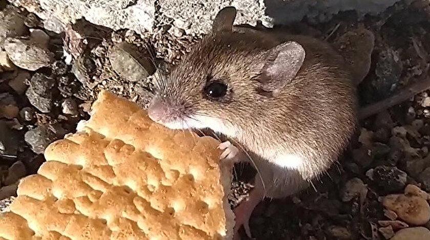 Bahçesindeki fareyi besliyor.