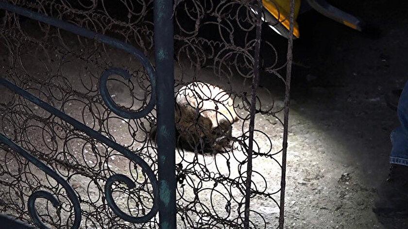 Antalya'da bir evin yanında yer alan bahçede insan kafatası bulundu.