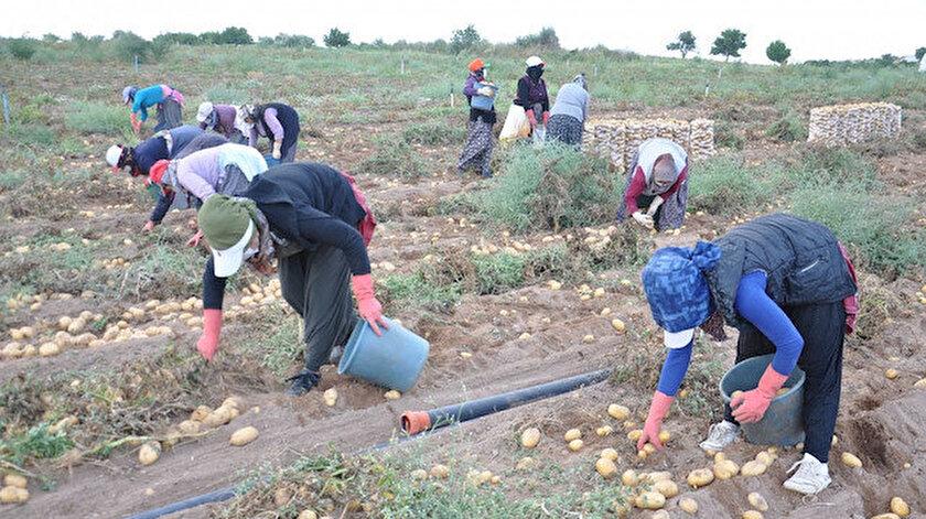Tarım ve Orman Bakanlığından patates ve soğan açıklaması: Kısıtlama yok