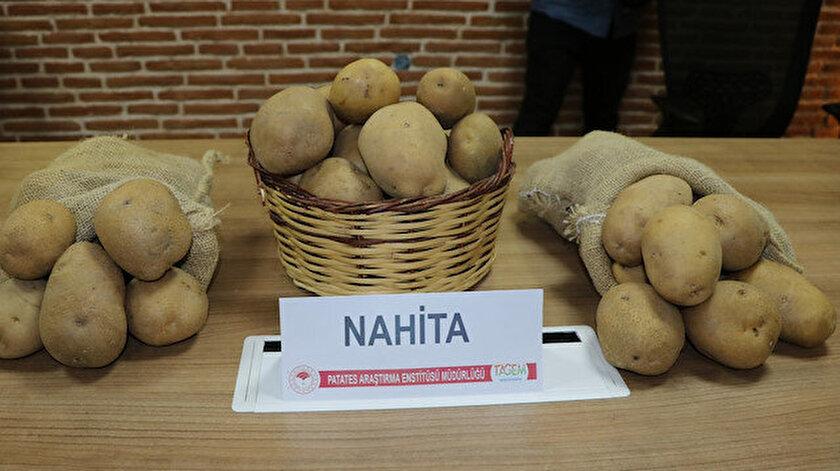 Yerli ve milli patates Avrupa yolunda: Deneme ekimi için Hollandaya gönderilecek