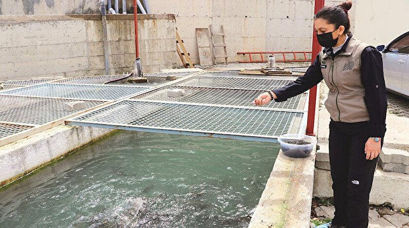 Bolu'nun iç suları balık kaynayacak