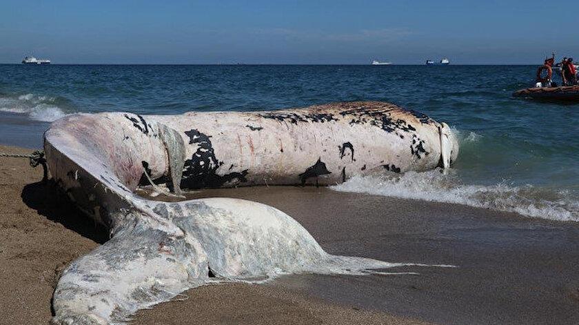 Mersinde karaya vuran dev balinanın ölüm nedeni belli oldu