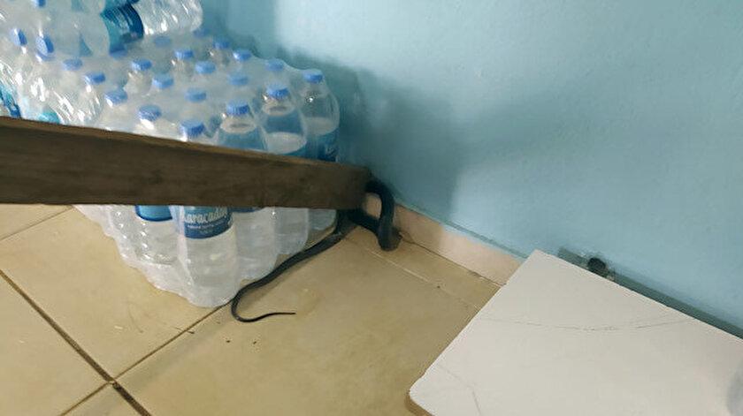Şanlıurfada markette yılan paniği