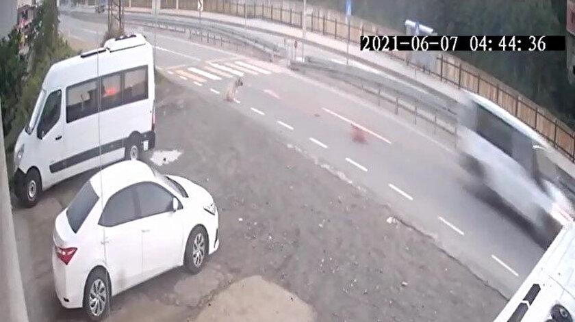 Rizede köpeğe minibüsle çarpıp ölümüne neden olan sürücüye 966 TL ceza