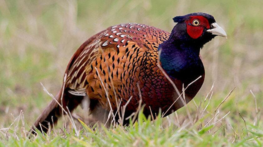 Kene avcıları geliyor: 13 farklı ilde 15 bini doğaya salınacak