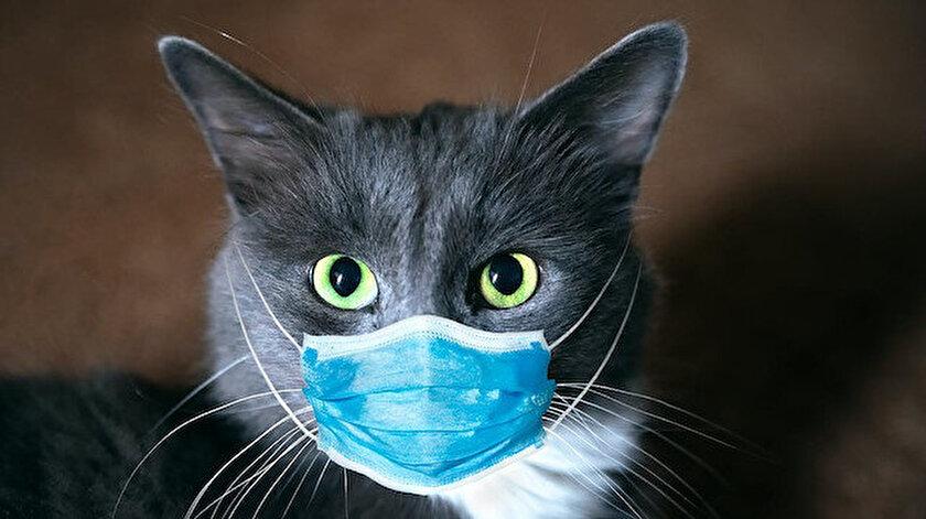 Koronavirüs haber: İngiliz varyantı ile enfekte olan ilk kedi bilimsel araştırma konusu oldu