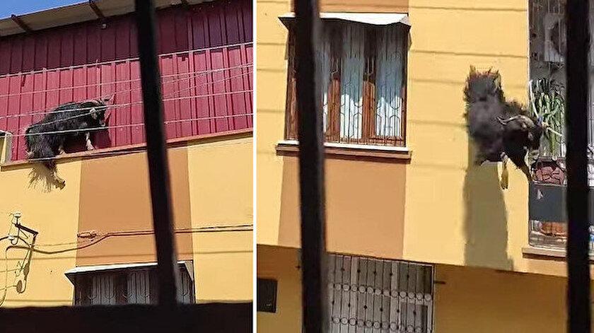 Adana haberleri: Kurbanlık keçi çatıdan düştü