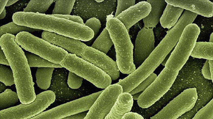 Bilim insanlarından şaşırtan keşif: 15 bin yıllık buzulda 28 yeni virüs bulundu