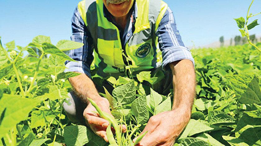 Talas'ta tarım deseni değişiyor  