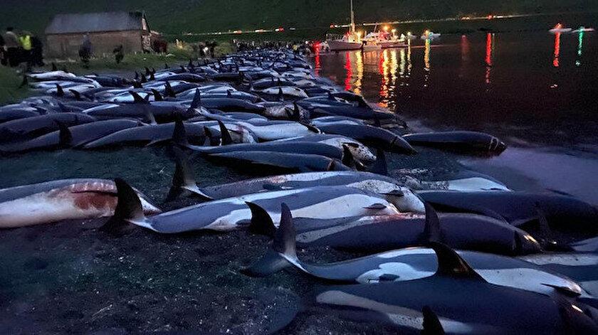 Danimarkada vahşet festivali: Bin 500 yunus katledildi
