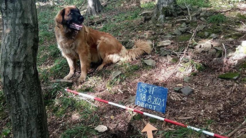 Çekyada ilginç keşif: Sahibinin gezmeye çıkardığı köpek 14. yüzyıldan kalma hazine buldu