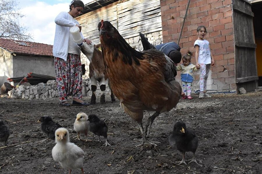 Hayvancılıkla uğraşan genç çift, yumurta ihtiyaçlarını da besledikleri tavuklardan elde ediyor.