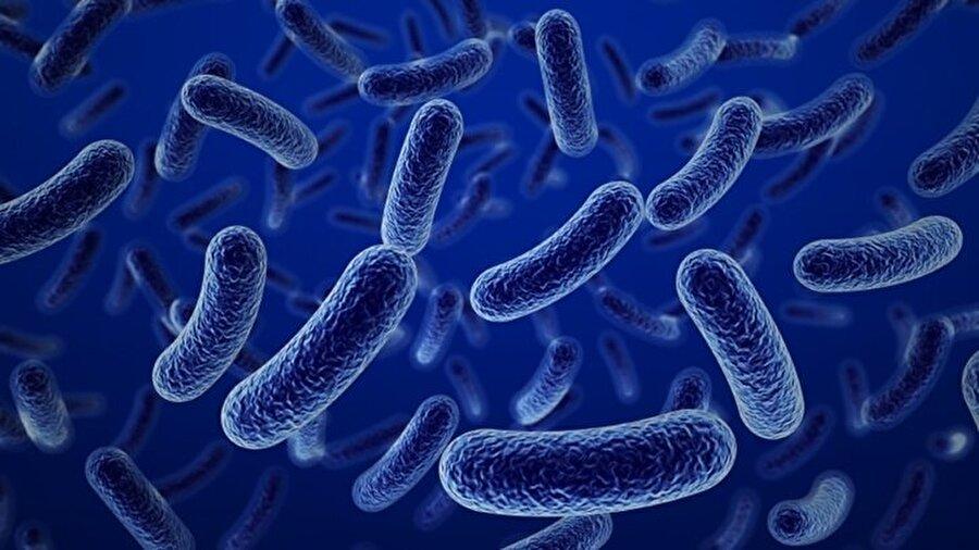 Bakterilerin temsili görüntüsü.