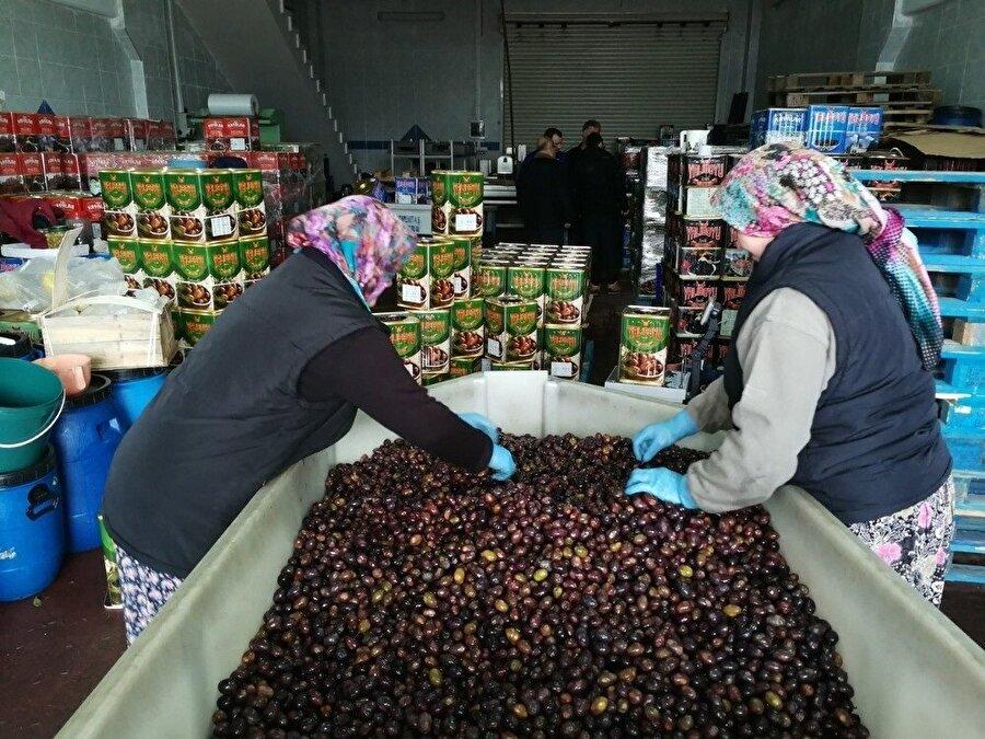 Kalamata zeytininin kilogram fiyatı 20 lira.