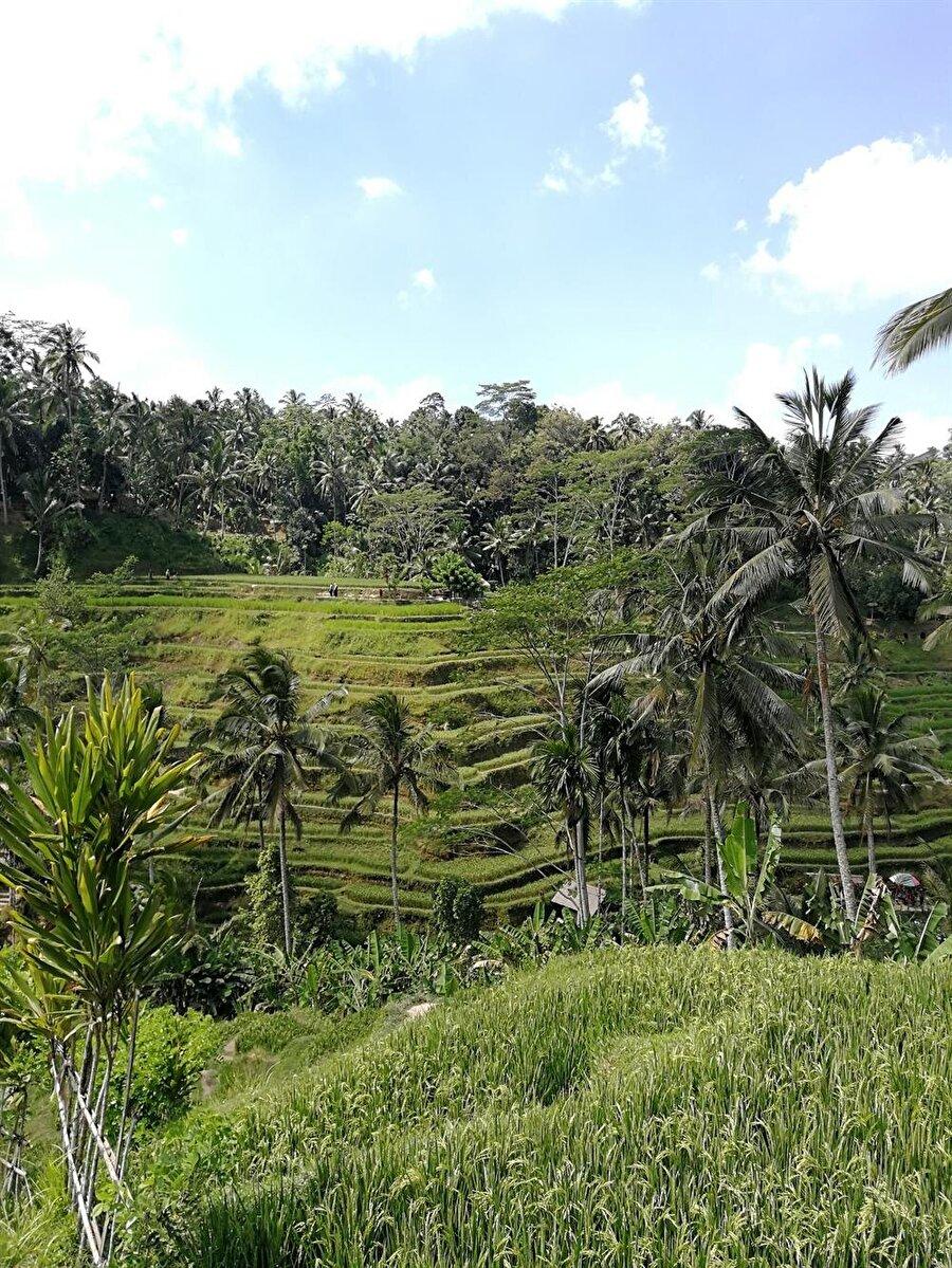 Bali, ziyaretçilerini yemyeşil doğasıyla karşılıyor. (Fotoğraf: Hatice Sarı Tan)