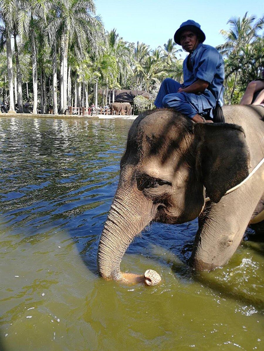 Bali'de filler, küçük yaşlardan itibaren sahipleriyle birlikte büyüyor. (Fotoğraf: Hatice Sarı Tan)