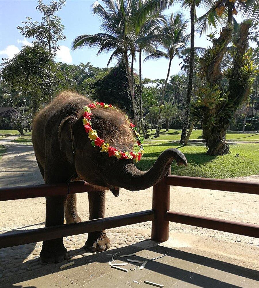 Filler, günlük yaşamın ayrılmaz bir parçası. (Fotoğraf: Hatice Sarı Tan)