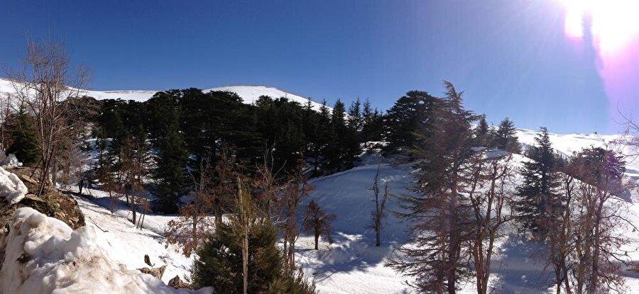 Lübnan bayrağında da sembol olarak yer alan sedir ağaçları ve karlı dağlar.