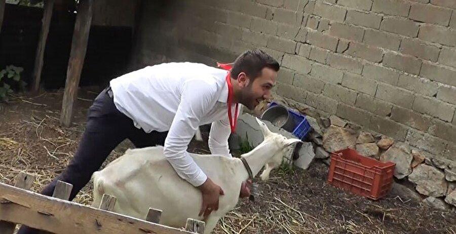 Ağıla sokulan damat, keçi yakalayıp süt sağdı. Damadın boynuna kurdela ile koyun çanı takıldı.