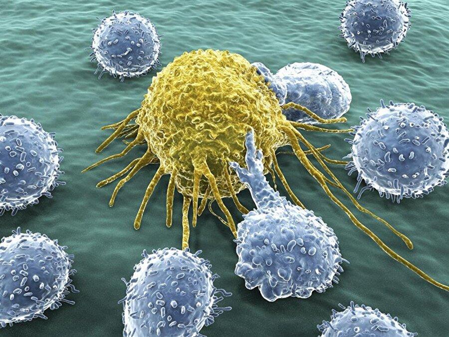 Kanser hücrelerinin hareketi, yeni sistemle anbean takip edilebiliyor.