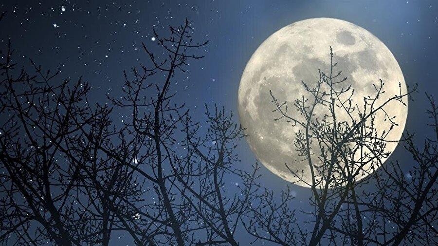 Dünyanın uydusu Ay, olanca heybetiyle ağacın ardından kendini gösteriyor.