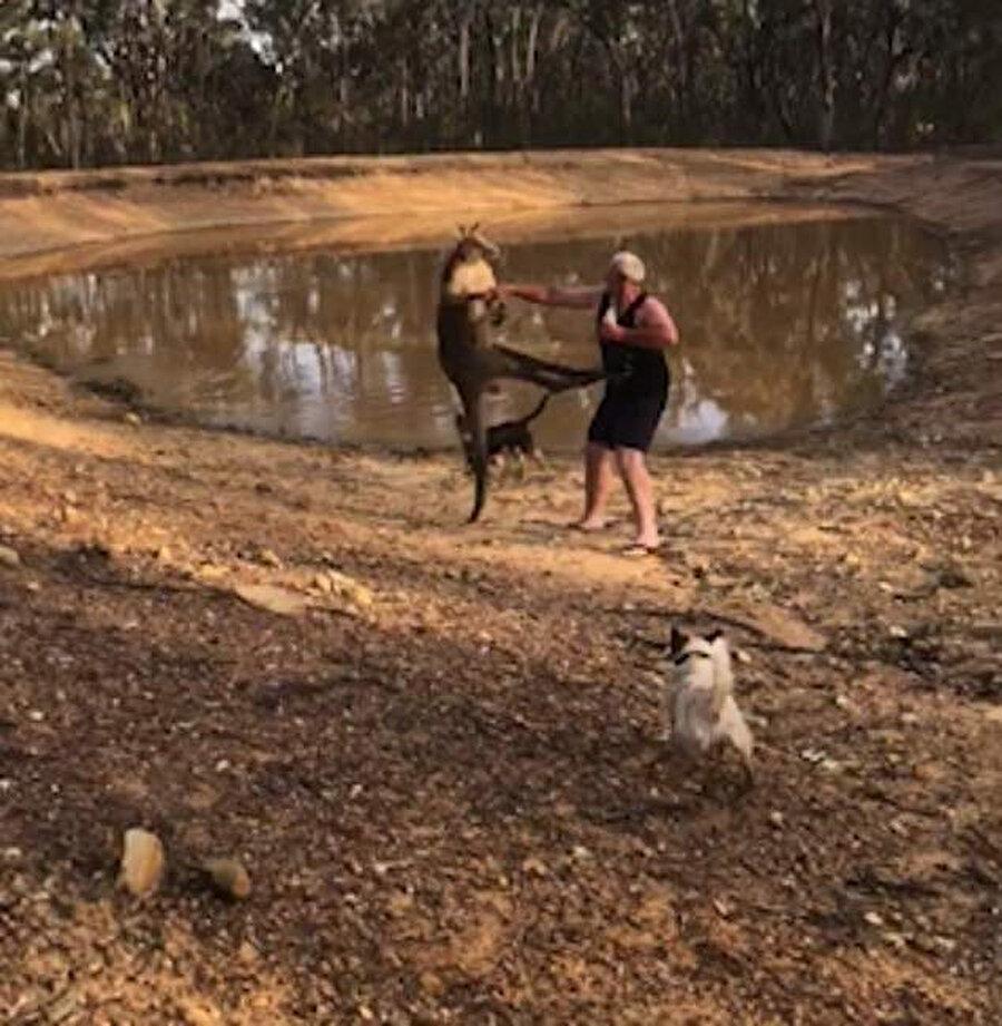 Tuohey, kanguruya yumrukla karşılık verdi.