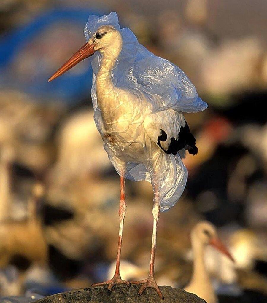 Çevre kirliliği hayvanları olumsuz etkileyebiliyor.