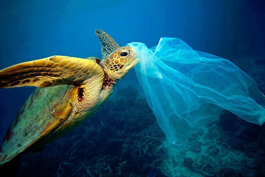 Denizlerde yaşayan canlılar plastik yutmaları sebebiyle hayatlarını kaybedebiliyor.