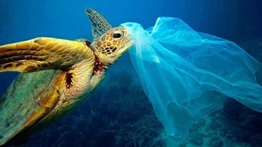 Plastik poşetler birçok canlıya zarar veriyor.