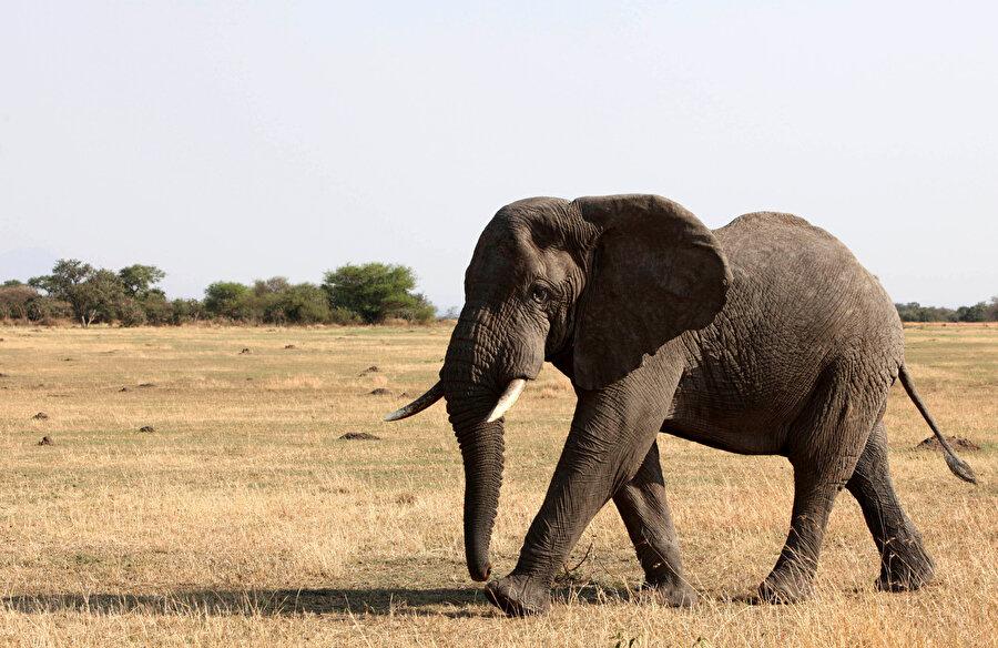 Safari tutkunlarının uğrak yeri Afrika...