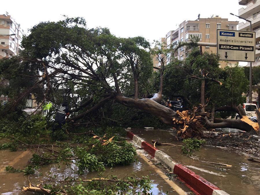 Fırtına nedeniyle kentin en işlek caddelerinden Yüzüncü Yıl Caddesi'nde çok sayıda ağaç devrildi. İki otomobil, devrilen ağaçların altında kaldı. Cadde, polis ekiplerince trafiğe kapatıldı. Antalya Büyükşehir Belediyesine bağlı itfaiye ekipleri, ağaçları keserek yolu açmaya çalışıyor.