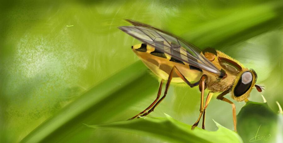 Böceklerin neslinin tükenmesi ve olası sıkıntılar bilim insanlarını harekete geçirmiş durumda.