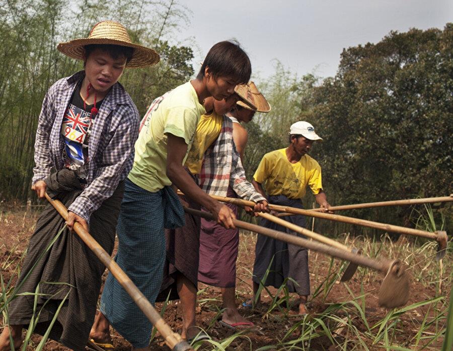 Myammar'da çiftçiler hala geleneksel yöntemlerle tarım yapıyor.