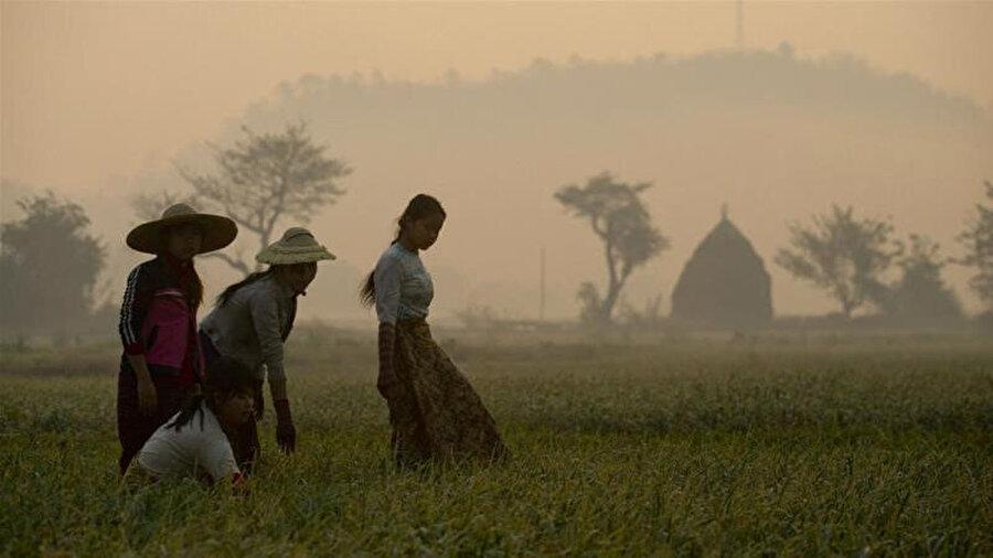 Bu yasa, zor koşullarda tarım yapan Myanmarlıların yükünü bir kat daha artırdı.