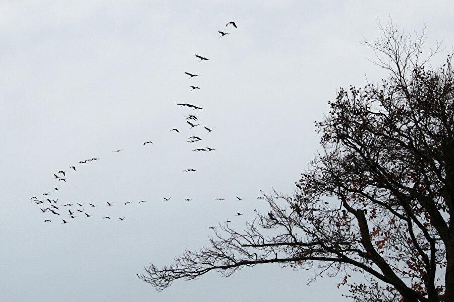 Tanrı kuşları ömürleri süresince ne yapar?