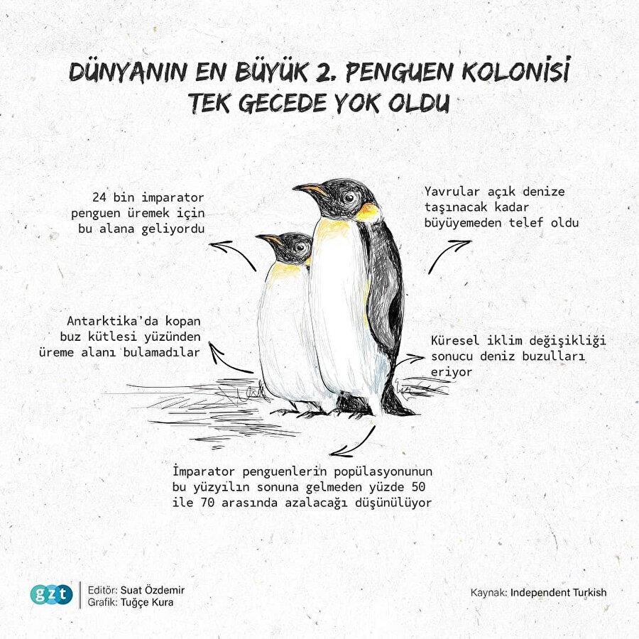 Araştırmacılar, penguenlerin izine düştü
