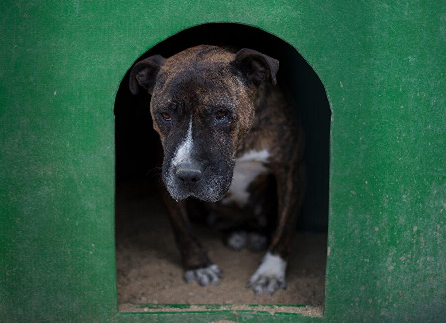 Barınakta yaşama mücadelesi veren 455 köpeğin içinde birçok cins köpek de bulunuyor.